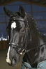 Bridle »Square Fake Diamonds«